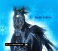 Diabolo, Pferd meiner Träume. Von Gabi Adam (2008)