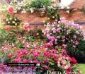 Rosenhandbuch. Von David Austin (2012)